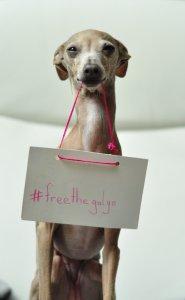 freethegalgo